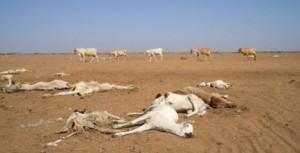 rechauffement-climatique-afrique